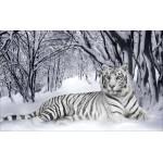Набор с нанесенным рисунком для вышивания бисером Империя бисера арт.ИБ-07 Белый тигр