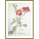 Набор для вышивания арт.ВЫШ -К-13 Роза бурбон 17x26 см