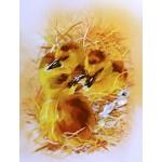 Набор для вышивания РИСУЕМ ИГЛОЙ арт. L-0002 Мини Люкс Рождение новой жизни (20х25 см)