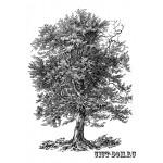 Штамп полимерный La Blanche  14,3*10 см  Old Oak упаковка 1 шт. LB1274