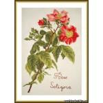 Набор для вышивания арт.ВЫШ -К-21 Роза Прерий 17x26 см