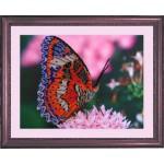 Набор для вышивания BUTTERFLY арт. 102 Бабочка 25х33см Б