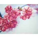 Набор для вышивания РИСУЕМ ИГЛОЙ арт. N0012. Люкс. Краски весны (45х35 см)