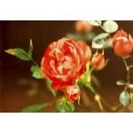 Набор для вышивания РИСУЕМ ИГЛОЙ арт. N0026. Люкс. Розовые мечты (30х45 см)