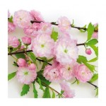 Салфетка бумажная 33 x 33 см (3 слоя, 20 шт в уп) Flowering almond
