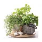 Салфетка бумажная 33 x 33 см (3 слоя, 20 шт в уп) Flavor of herbs